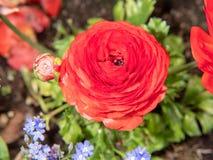 Fleurs rouges dans le jardin image stock