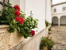 Fleurs rouges dans le pot de fleurs en pierre devant la vieille cour Photographie stock libre de droits
