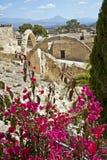 Fleurs rouges dans le premier plan de Santa Barbara Chapel photo stock