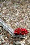Fleurs rouges dans un pot contre un mur en pierre Photos libres de droits