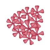 Fleurs rouges de Graveolens de Rose Geranium Flowers ou de pélargonium Image libre de droits
