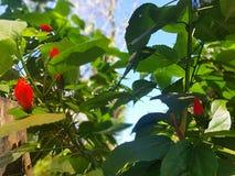 Fleurs rouges et ciel bleu photographie stock