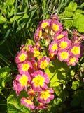 Fleurs rouges et jaunes lames de vert photo stock