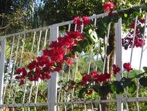 Fleurs rouges et plantes vertes images stock