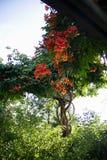 Fleurs rouges et plantes vertes en journée Image stock