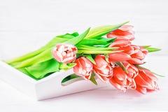Fleurs rouges fraîches de tulipes sur un fond blanc Copiez l'espace image stock