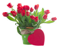 Fleurs rouges fraîches de tulipe Image libre de droits