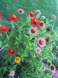 Fleurs rouges, jaunes et roses Images stock
