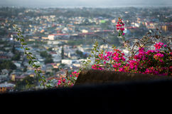 Fleurs rouges luxuriantes aux toits résidentiels Image stock