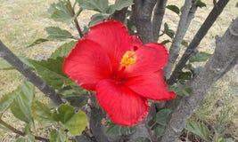 Fleurs rouges, plantes vertes Image libre de droits