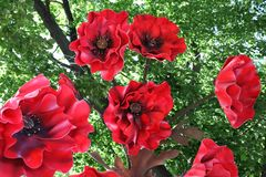 Fleurs rouges pour la décoration Image libre de droits