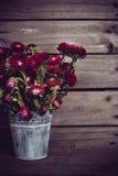 Fleurs rouges rustiques Images libres de droits