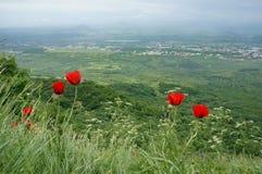 Fleurs rouges sur la montagne Photo stock