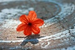 Fleurs rouges sur la table Photos libres de droits