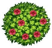 Fleurs rouges sur le buisson rond illustration stock