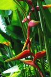 Fleurs rouges tropicales photos stock