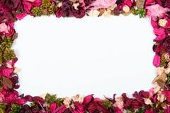 Fleurs sèches illustration libre de droits