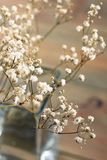 Fleurs sèches Photos libres de droits