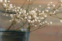 Fleurs sèches Image libre de droits
