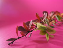 Fleurs sèches Images stock
