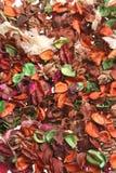 Fleurs sèches Photo stock