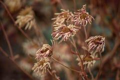Fleurs sèches Photo libre de droits