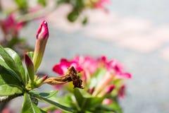 Fleurs sèches abstraites, fleurs d'azalée Photos libres de droits