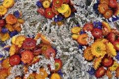 Fleurs sèches colorées Photographie stock libre de droits