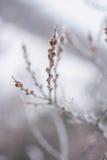 Fleurs sèches congelées sous la neige Photo libre de droits
