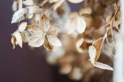 Fleurs sèches d'hortensia Photo libre de droits