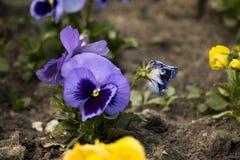 Fleurs sèches dans le parterre photos stock