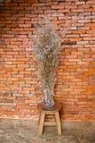 Fleurs sèches dans un vase, orange de pièce Images stock