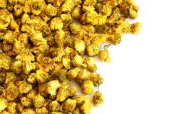 Fleurs sèches de chrysanthème sur le blanc Image libre de droits