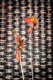 Fleurs sèches de cosmos Images libres de droits