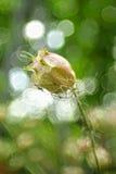 Fleurs sèches de fleur Photographie stock