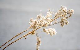 Fleurs sèches de Smal Images stock