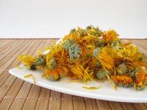 Fleurs sèches de souci Image stock