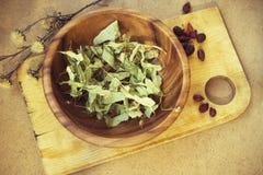 Fleurs sèches de tilleul Image stock