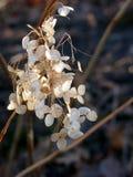 Fleurs sèches en hiver photographie stock libre de droits