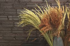 Fleurs sèches et bouquet sec de riz dans le pot de fleurs Image libre de droits