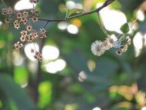 Fleurs sèches et sépale sec sur des arbres avec la lumière du soleil brillant dans le jardin photographie stock libre de droits