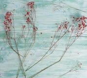 Fleurs sèches, fond en bois, couleur en bon état, toujours la vie Image stock