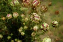 Fleurs sèches par fleurs Images stock