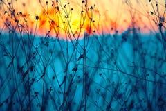 Fleurs sèches sur un coucher du soleil de fond Images libres de droits