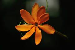 Fleurs s'arrêtantes Image stock