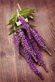 Fleurs sages Image stock