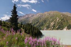 Fleurs sages sur le fond de belles montagnes et rivière d'herbe photographie stock libre de droits