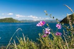 Fleurs sans compter que la rivière Photographie stock