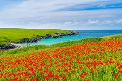 Fleurs sauvages à la plaisanterie les Cornouailles de Porth Photographie stock libre de droits