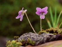 Fleurs sauvages photo libre de droits